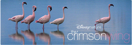 DisneyNature - Crimson Wing