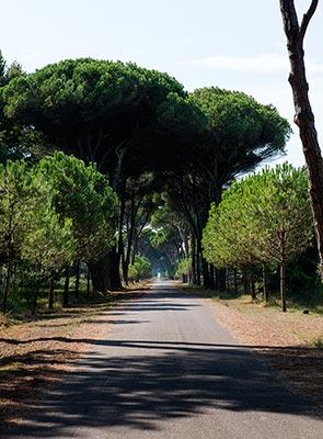 Pisa San Rossore Park - path to Gombo