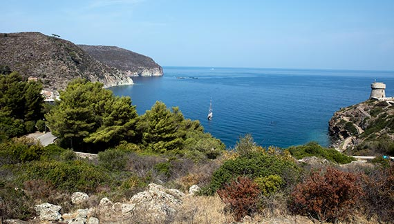Capraia Isola trail from the village to port