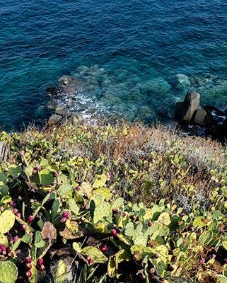 Capraia Isola prickly pears and the Ligurian Sea
