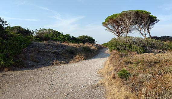 Capraia Isola - trail to Zurletto Beach 3