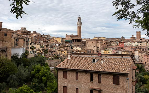 View of Siena and the Torre del Mangia in the distance