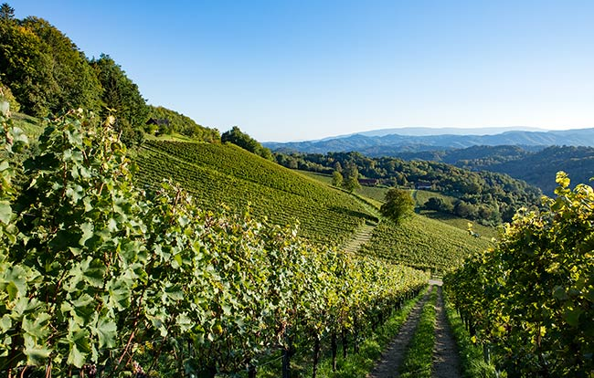 Südsteiermark - The stunning panorama of Ried Zieregg at Weingut Tement