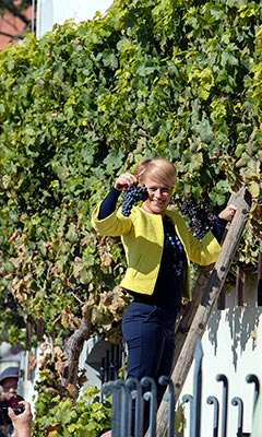 Maribor - Harvest Festival - first cutting of the grapes